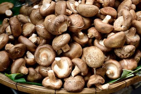 longevity: Raw and dried shitake mushroom that has medicinal  nutritional health benefits .