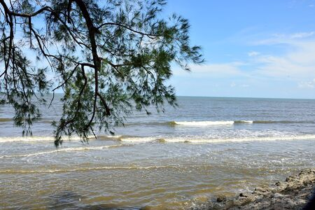 The beach of sand and rocks with pine tree as a foreground  at Prasae village , Rayong Province , Thailand.