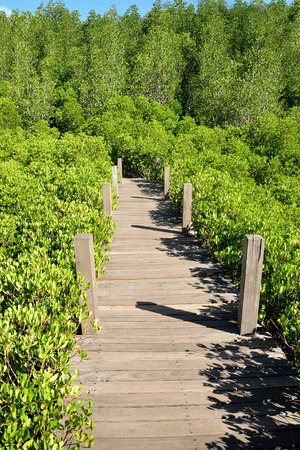 prong: A wooden path passes through the field of prong shrubs and trees  grown in Rayong mangrove forest.