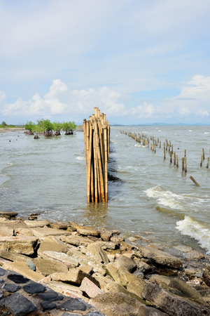 Bamboo barrier was built to make a boundary for mangrove plantation.