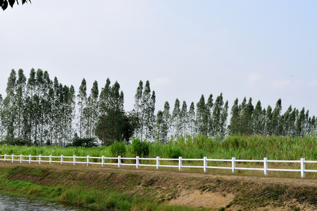 demarcation: The white wooden fence built for demarcation with a row of pine trees on the background.