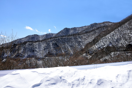 The shedding trees on stony mountains and white snowfields in the foreground.