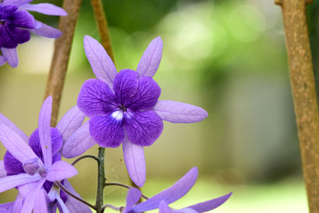 papery: The flowering plants that have delicate purple flowers but stiff and papery leaves.