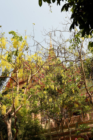 tiers: The golden Thai temple with yellow cassia flowers in the foreground.