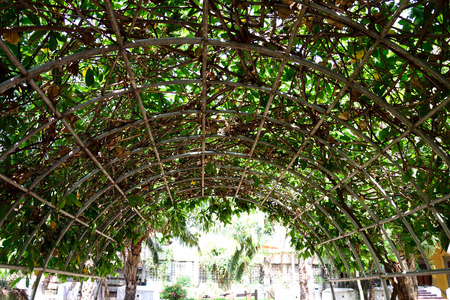 provide: An iron  archway made  and creeper plants to provide shade and shadow.
