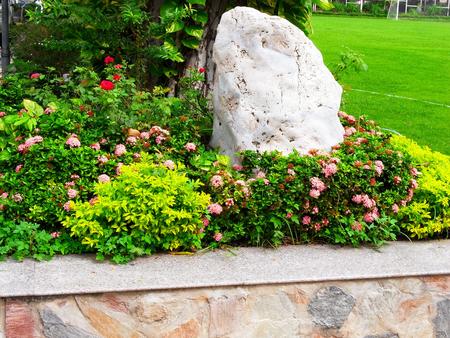 flowering plants: A garden corner  design by using leafy plants , flowering plants and a rock.