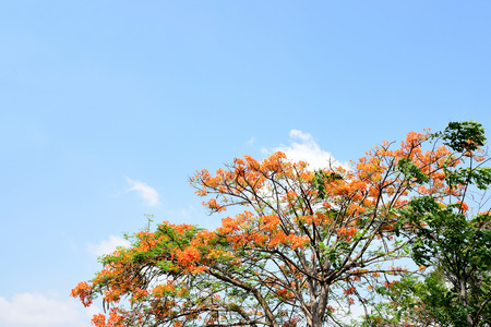 liked: Delonix regia is the large ornamental plant with orange - red flowers and provides full shade.