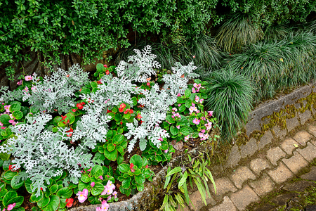 A small garden decorated by using ferns , small leafy and flowering plants grown in a woody container.