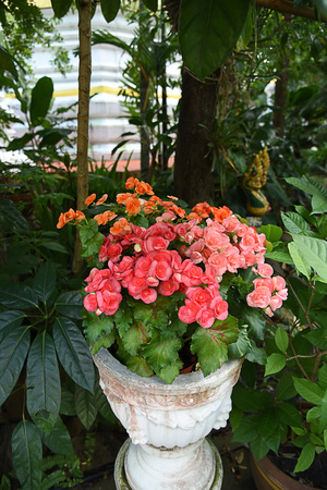 The perennial plants with bright red colored flowers.