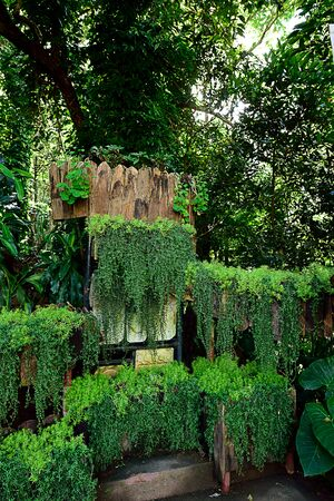 A pattern of vertical garden of hanging leafy plants that is not hard to take care.