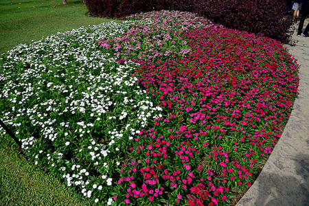 The arrangement of fowers to be colorful bands.