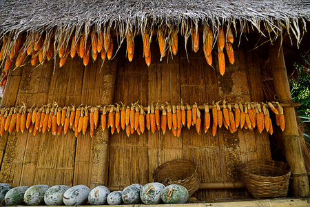 Corns are dried and dehydrated to preserve flavor , color and nutrition.