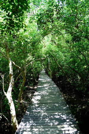 A wooden path leads through a mangrove forest in Phetchaburi Province , Thailand.