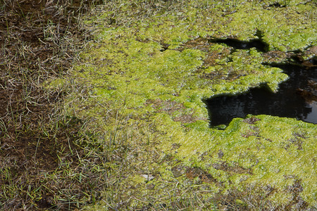 A hydrothermal area at Yellowstone provide the habitat for thermophillic bacteria to form microbial mat in various colors.