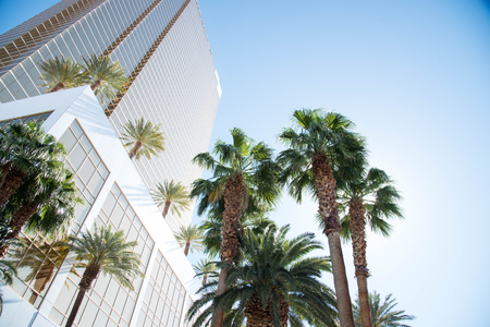 decoraton: Date palms grown for decoration outside a building.