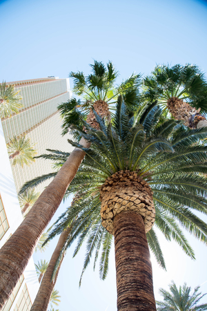 dioecious: Date trees typically reach 21 - 23 metres in height with full span of the crown range from 6 - 10 metres.