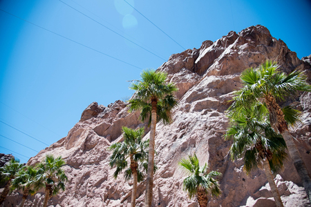 hoover dam: A slope of brown colored mountains in contrast with green date palms and blue sky.
