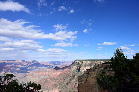 A scenery of Grand Canyon with cloud shadows projected on amd pine trees as a foreground.
