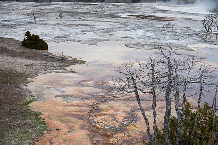 The dryad  spring in Mammoth Hot Spring in Yellowstone National Park , Wyoming. Stock Photo