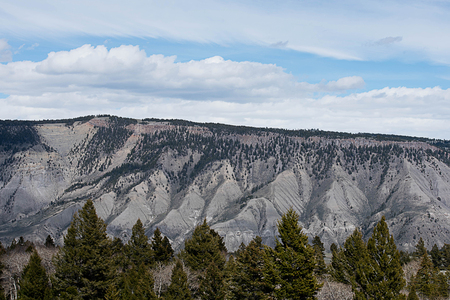 The texture of mountain ranges with pine forest  in Yellowstone National Park , Wyoming. Stock Photo
