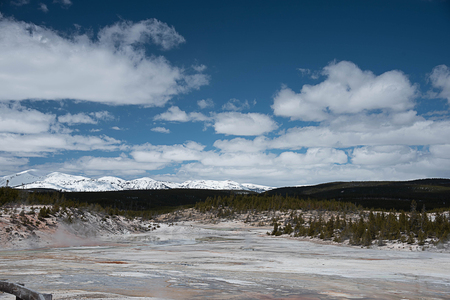 The landscape of colorful Norris Geyser Basin and pine forest with  snowy mountains  and blue sky as backgrounds. Stock Photo