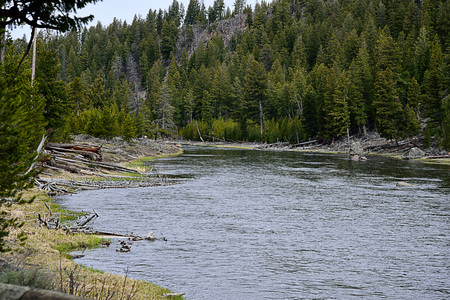 The natural way of life in Yellowstone National Park consist of forest , river and animals. Stock fotó