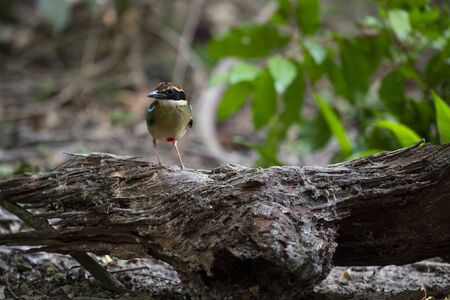 The small colorful bird is standing on a decayed log.