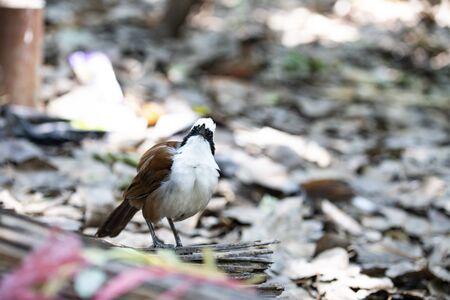 A highly sociable bird is standing on the ground and looking up.