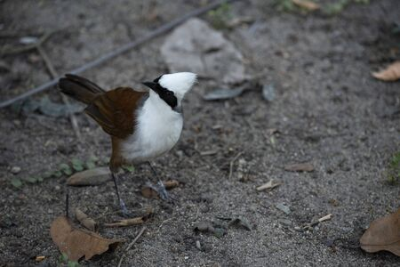 A highly sociable bird is standing on the ground and looking puzzled. Banco de Imagens
