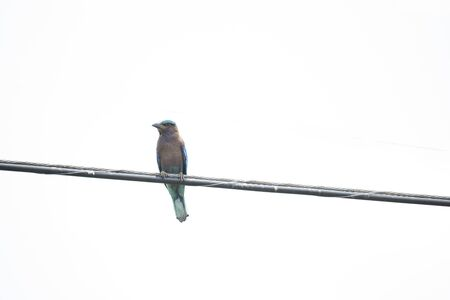 The stocky blue bird was perching on a cable in sunlight.