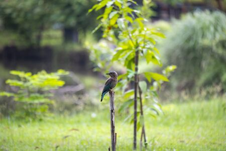 The stocky blue bird was perching on a wood stump in sunlight.