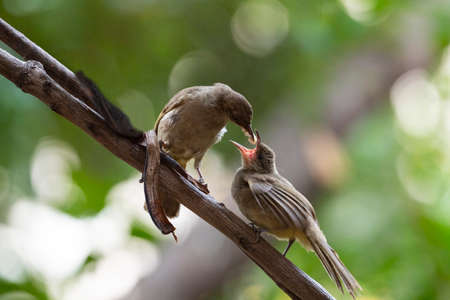 A mother bird is feeding its baby on a tree branch.