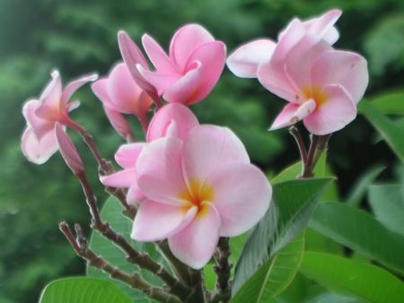 thom: Flowers Lan Thom