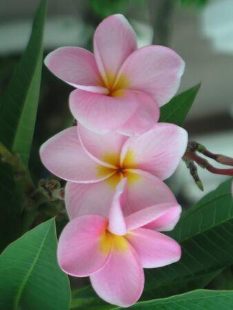 Flowers Lan Thom Stock Photo - 13954285