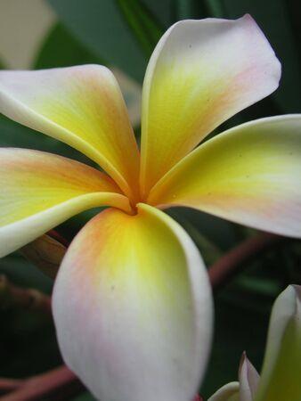 Lan Thom flower photo