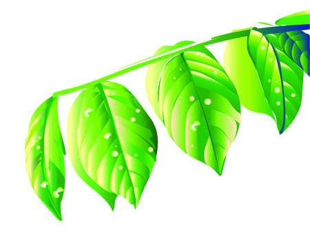 leaf tree isoledted