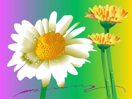 gerbera daisy: gerbera margarita flor del arte