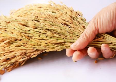 rice thai and hand