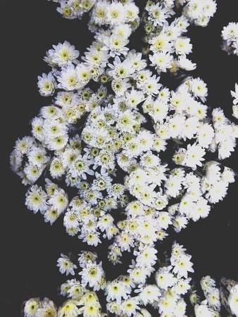 white: Flower white in market