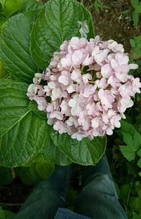 Pink soft beautiful flowers Stock Photo
