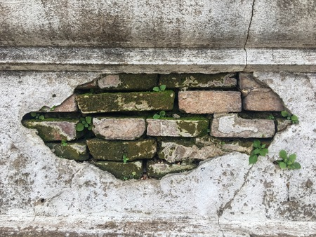 A close up of an aged,cracked and chipped stucco wall with an area of exposed brown brick with green moss and plant that growing through the wall.