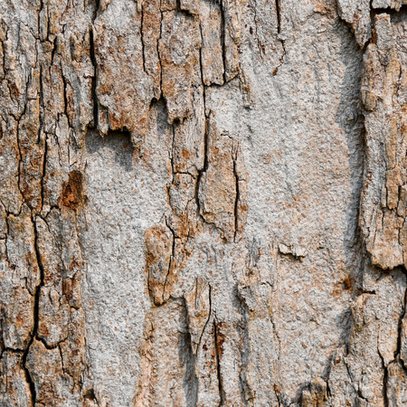 Tree bark textured and background. Cracked wood texture. Nature background. Zdjęcie Seryjne