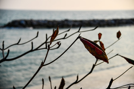Tree branches and leaves at the beach in Thailand. Nature background and wallpaper. Zdjęcie Seryjne