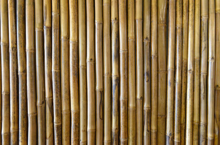 Bamboo texture, background and wallpaper. Wall decoration and design. Zdjęcie Seryjne