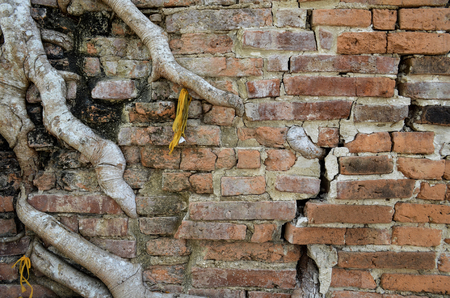 Tree roots growth through grungy cracked ancient brick wall at the temple in Thailand. Aged brick wall texture. Brick wall background texture . Exterior brick wall design.