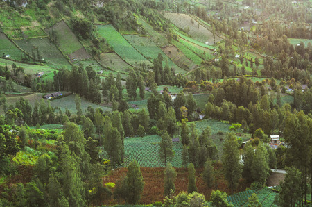 View of green trees, agriculture field, hill and village in the Tengger Mountains ,Indonesia,nearby Mount Bromo. Nature landscape, ecology and greenery  background and wallpaper. Zdjęcie Seryjne
