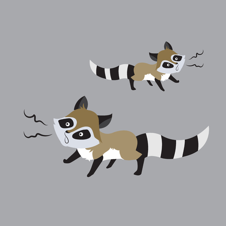 raccoon animal cute little cartoon. Colorful and flat design. Vector illustration Illustration