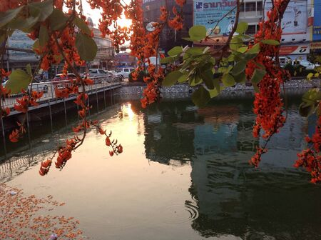 beside: Chongko is blossom in summer it beside canal near Yhamo monument