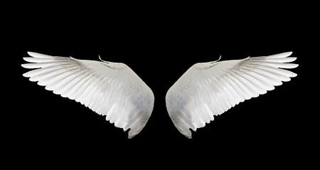 white wing swan isolate Archivio Fotografico