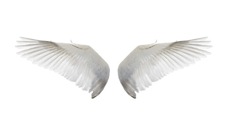 white wing isolate Stock Photo